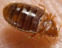1 Hack The Neurotransmitters Hacking Of Bed Bugs